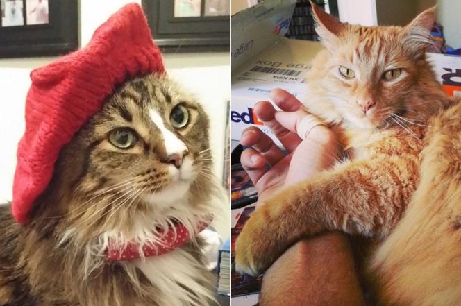 ロペス兄弟 猫